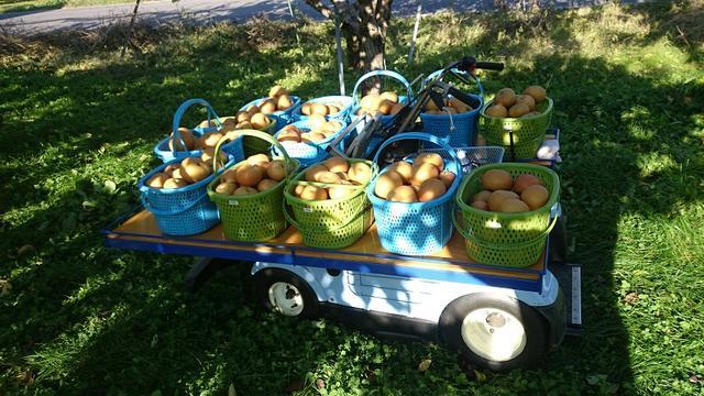 画像: 立ち乗り式を改良して農園の収穫用に