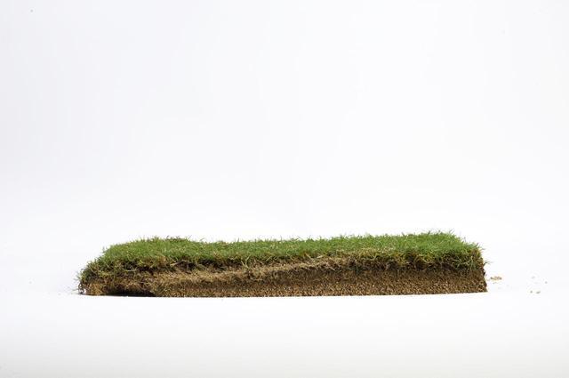 画像: 「プレシジョン」のターフ跡断面。厚さ3センチのベント芝ロールの底に達するほど深くヘッドが入ってしまった。