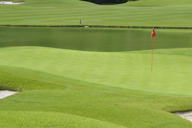 画像: グリーン、フェアウェイ、ラフ……ゴルフ場では場所によって芝の種類も違えば長さも違う。サッカースタジアムで用いられる芝は、基本的には一種類だ