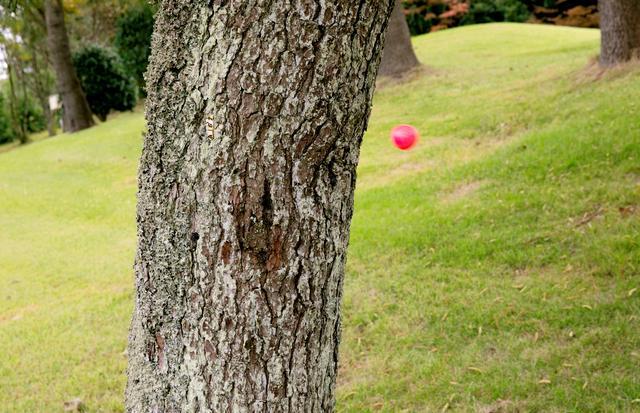 画像: スッ コーーーーン! 「いやー! 木にも?」