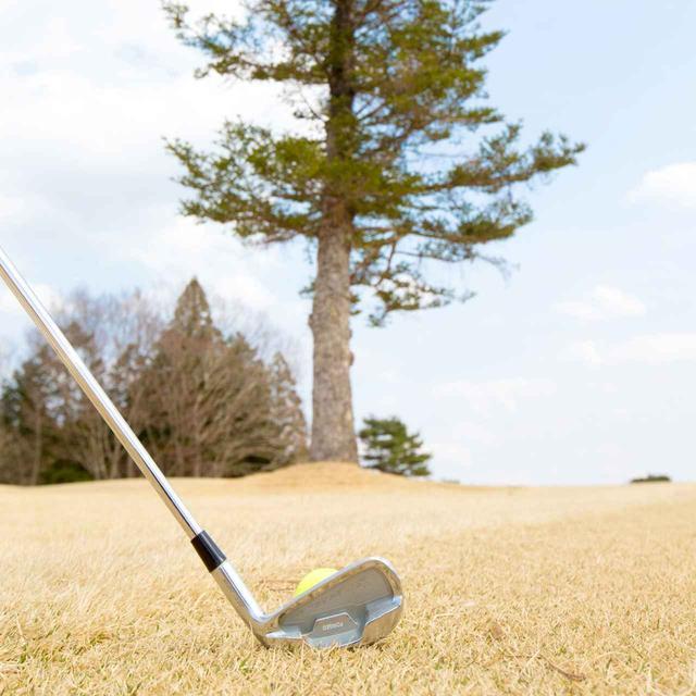 """画像: 木が邪魔でグリーンを真っすぐ狙えない状況を""""スタイミー""""表現するが、元々の意味は……(撮影/田中宏幸)"""