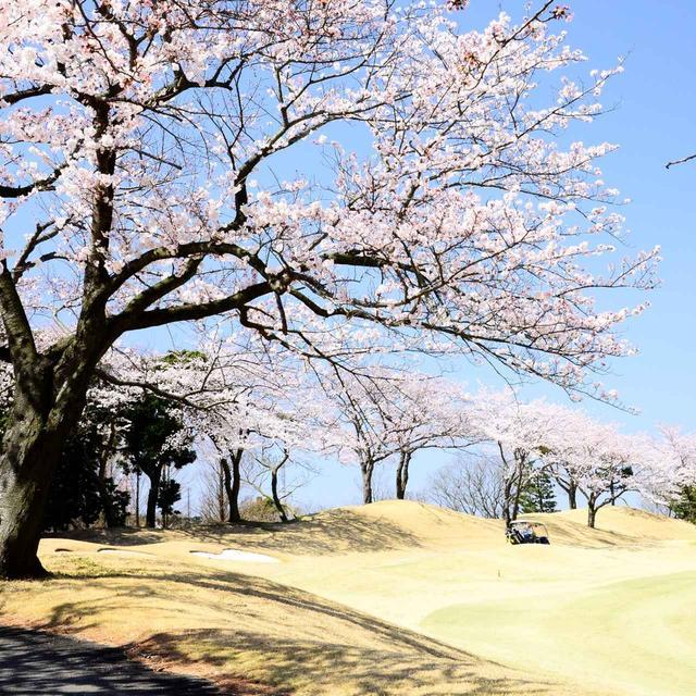 画像: もうすぐ桜の季節。自然に目を向けて凹んだメンタルを切り替えよう(撮影/横山博昭)