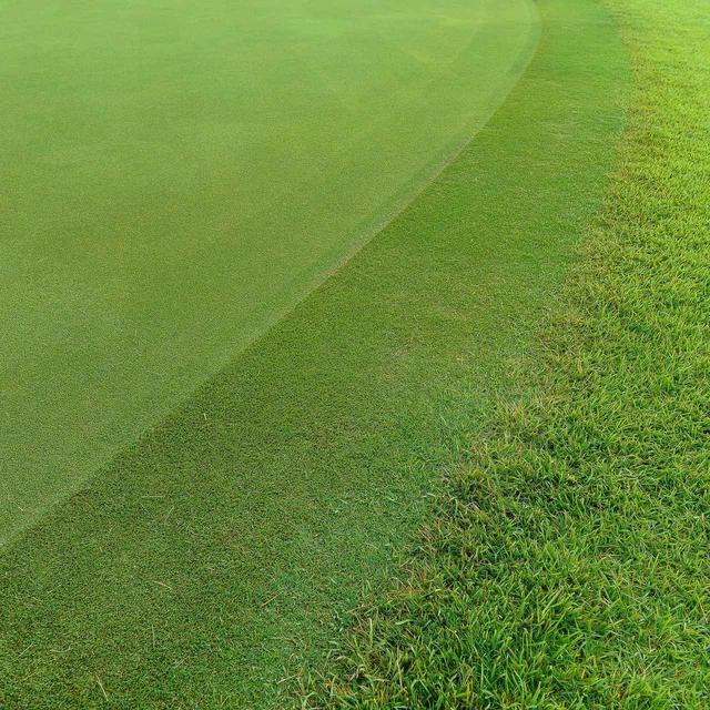 画像: グリーンを囲む「カラー」はなんのためにある? 【ゴルフ用語】 - みんなのゴルフダイジェスト