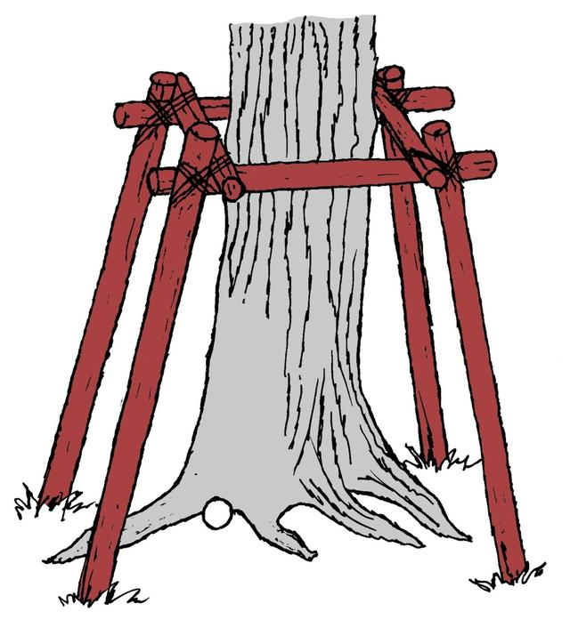 画像: ジェネラルエリア内の木の根っこに球が止まった…。 救済を受けられる?受けられない?