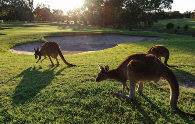 """画像: オーストラリアのあるゴルフ倶楽部にはコースをいたわるための""""罰金タイム""""という伝統があったとか"""