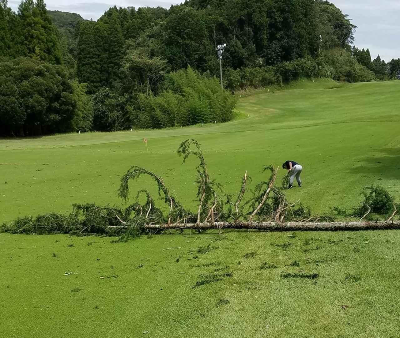 画像: 9日未明の台風15号による豪雨と暴風により、マクレガーCCのコースではフェアウェイを横切るように倒木が