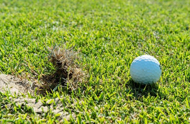 画像: 「芝がめくれあがっているわね」