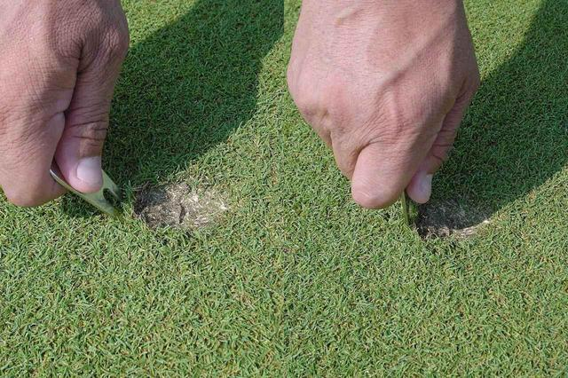 画像: 斜めに刺して、芝を穴の中央に寄せるように柄の部分を立てる