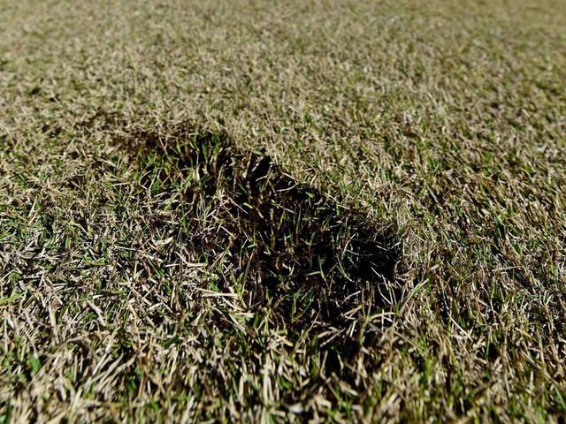 画像: ショットの際に削り取られた芝生の塊をディボット、削られてできた凹みをディボット跡という