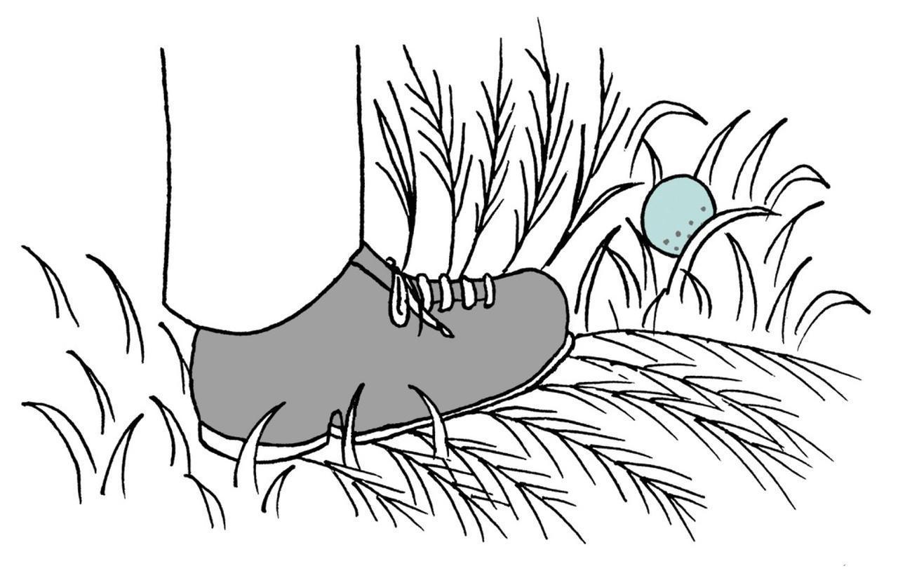 画像: ボールを探している時に草木を曲げたり折ったりすることはできる?