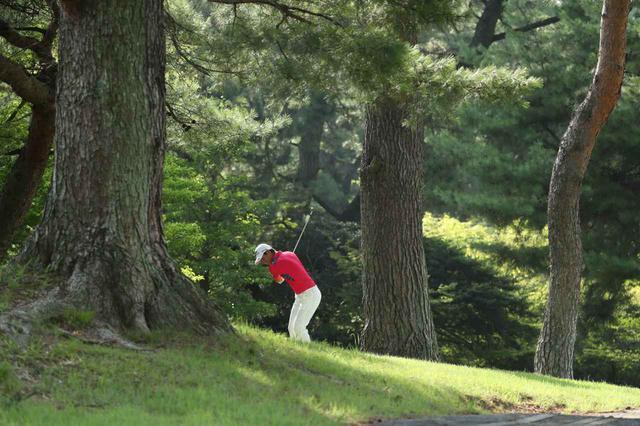 画像: 林の中に入れてしまったとき、冷静にジャッジできるかどうかで、スコアは変わる(撮影/姉崎正)