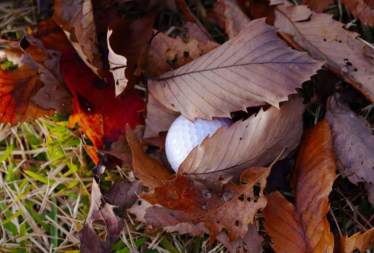 画像: 落ち葉に埋もれたボールを拾い上げて確認すると、自分のものと判明。リプレースする際に地面の落ち葉はルースインペディメントとして取り除ける?