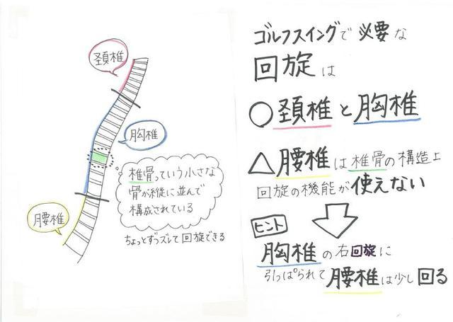 """画像: """"胸椎""""を回旋させることがゴルフスウィングの基本となる(イラスト提供/大谷奈千代)"""
