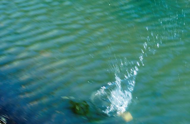 画像: チャポーン! 「あ~あ、池の中に入っちゃった(泣)」