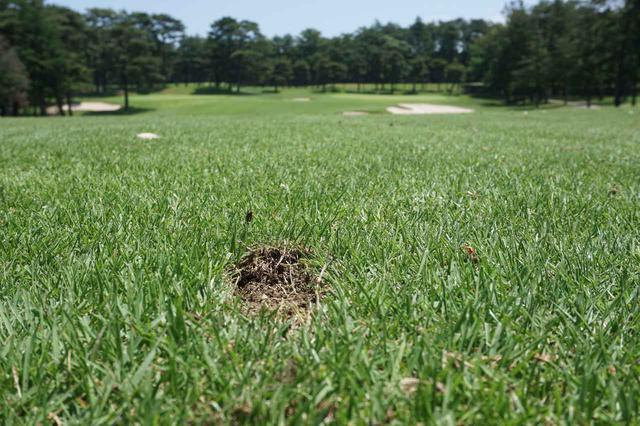 画像: アイアン・ウェッジで芝生を削り取ってしまった箇所=ティボット跡。寒冷地や高原で洋芝を採用するコースなら飛んで行ったディボットをこの跡に戻して踏む。それ以外のコースではティボット跡を砂で満たそう。ディボットを戻しても根が付いていないので再生しない