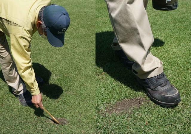 画像: 多少多めに砂を入れて爪先で均す。窪みを埋め、地表を平らにすることが目土の第一目的だ