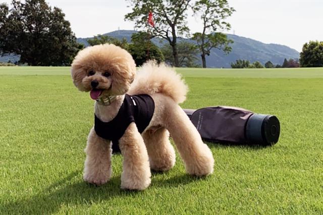 画像: 吉田一尊プロの愛犬・レオンくん(3歳/トイプードル)。性格はわんぱくで、鶏ささみのおやつが大好きとのこと。