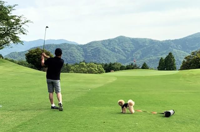 画像: 愛犬同伴ラウンドの様子。レオンくんは吉田のプレーを見ることなく、ばっちりカメラ目線