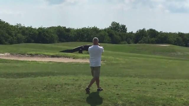 画像: Talk about a hazard! Giant gator strolls across Buffalo Creek Golf Course www.youtube.com