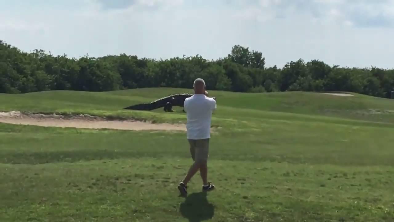 画像: Talk about a hazard! Giant gator strolls across Buffalo Creek Golf Course www.youtube.com
