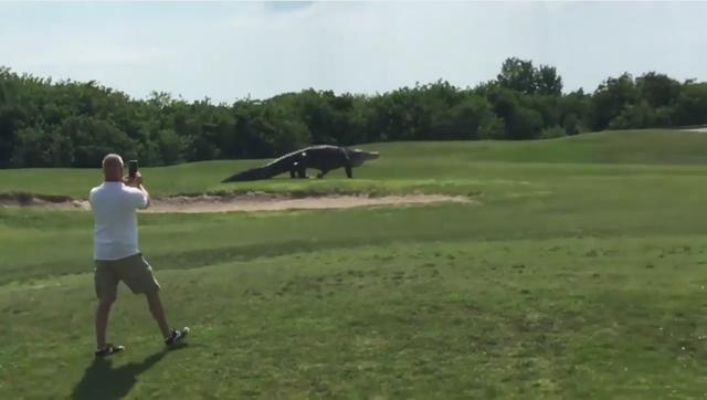 画像: この男性、勇気がありすぎると私は思います。 www.youtube.com