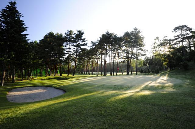 画像: 木々の間から差し込む朝日が幻想的な空間を作りだす。(撮影/ 横山博昭)