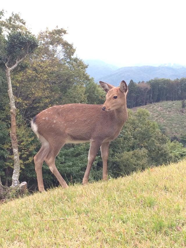画像: 野生の鹿に出会えたらラッキー!
