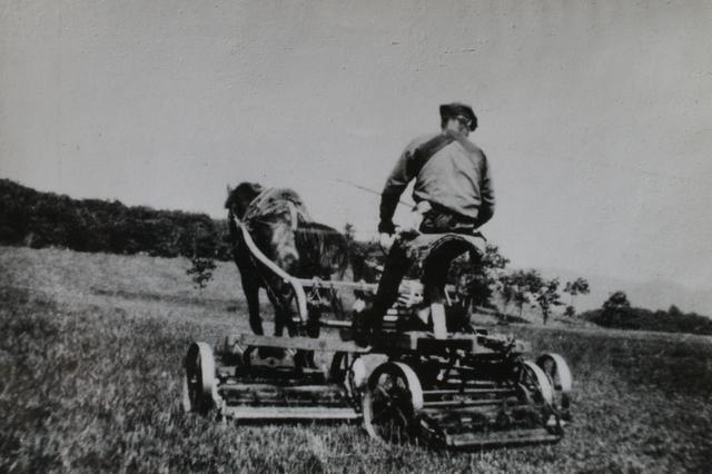 画像: 写真のようにフェアウェイは馬が引くモアを利用して刈られていた。