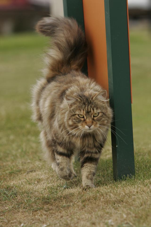 画像: 人間だったら「あ、ネコだ」で済むが、機械にとってこの写真を見てネコと認識するのはカンタンではない