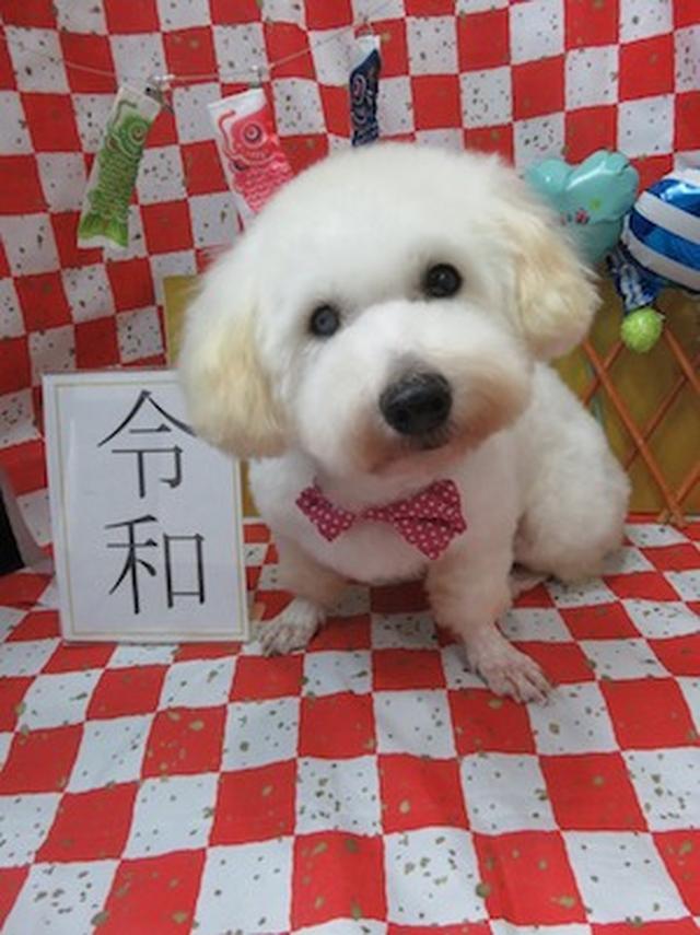画像: Dog Shelter