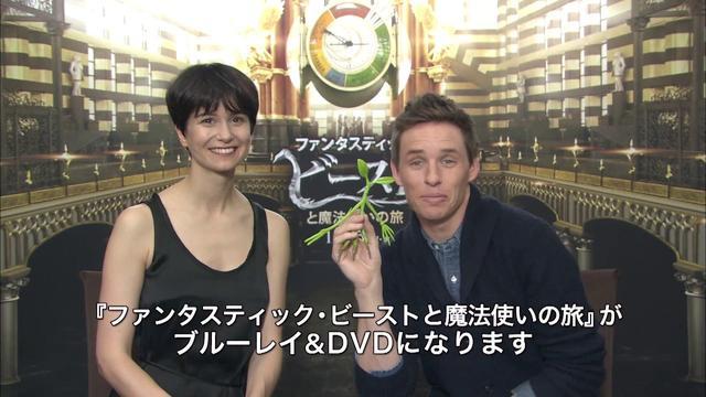 画像: Blu-ray&DVD『ファンタスティック・ビーストと魔法使いの旅』トレーラー 4月19日リリース youtu.be