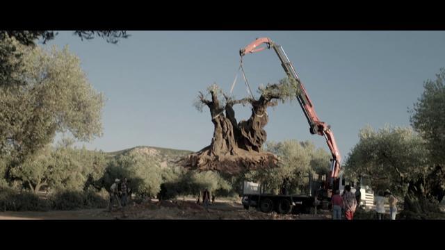 画像: 「オリーブの樹は呼んでいる」予告 youtu.be