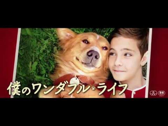 画像: 『僕のワンダフル・ライフ』予告編 youtu.be