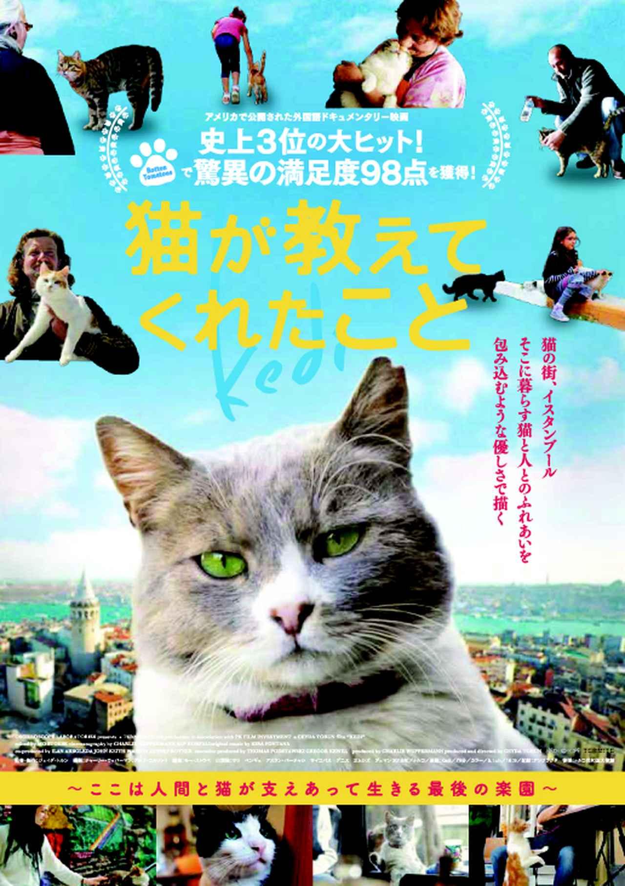 """画像: 猫と人間の幸せな関係を猫目線で描く""""猫たちへのラブレター"""""""