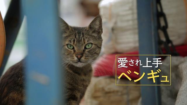 画像: 映画『猫が教えてくれたこと』予告編 www.youtube.com
