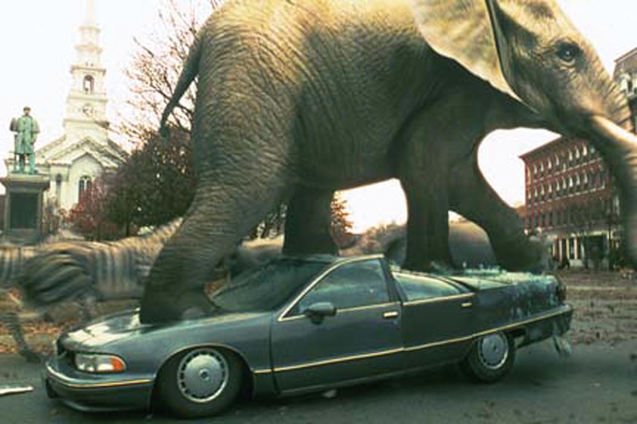 画像: 野生動物が現実世界に飛び出した