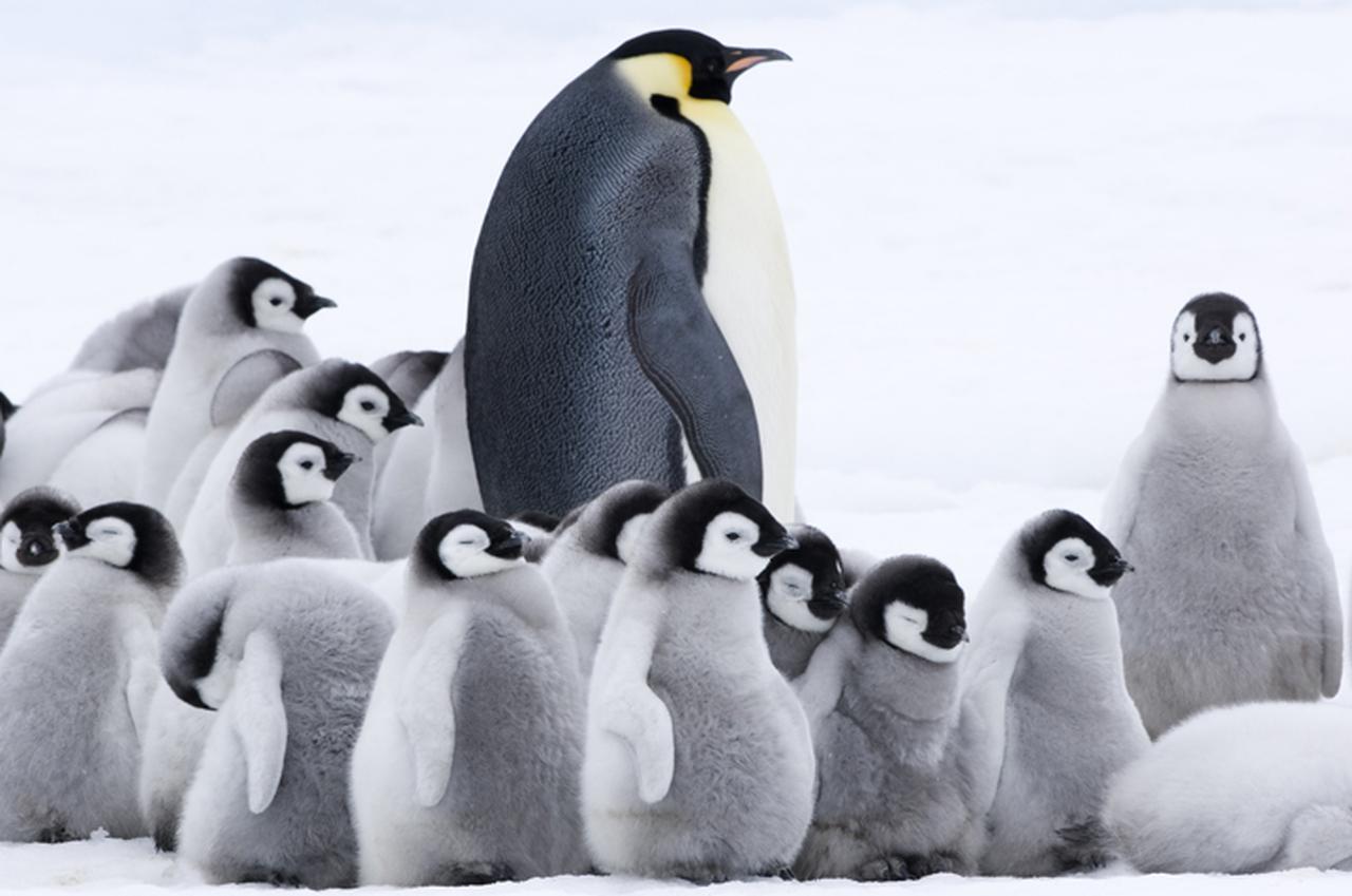 デジタル4Kが捉えた南極に生きる...