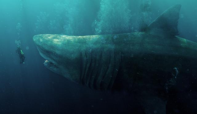 画像: ♪今度のサメは、すごいデカイ
