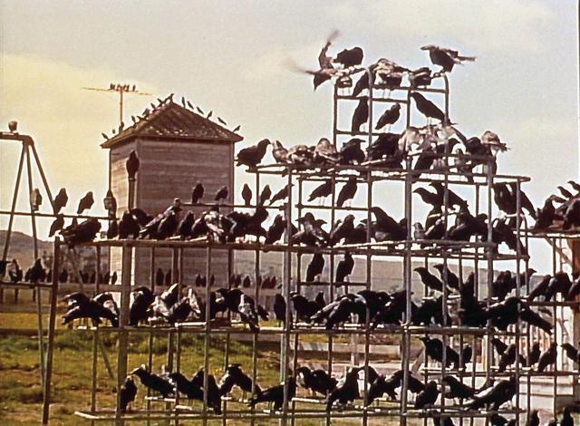 画像: 鳥が、鳥が、鳥が、鳥が襲う!