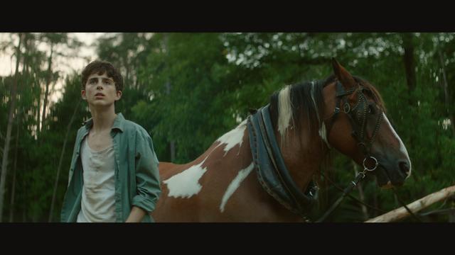 """画像2: 『君の名前で僕を呼んで』の美男子ティモシー・シャラメの""""幻の主演作""""が『未体験ゾーンの映画たち2019』で上映決定"""