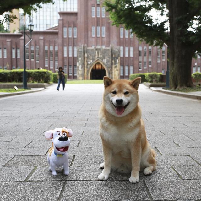 画像2: 「ペット2」で柴犬まるがハリウッド・デビュー!