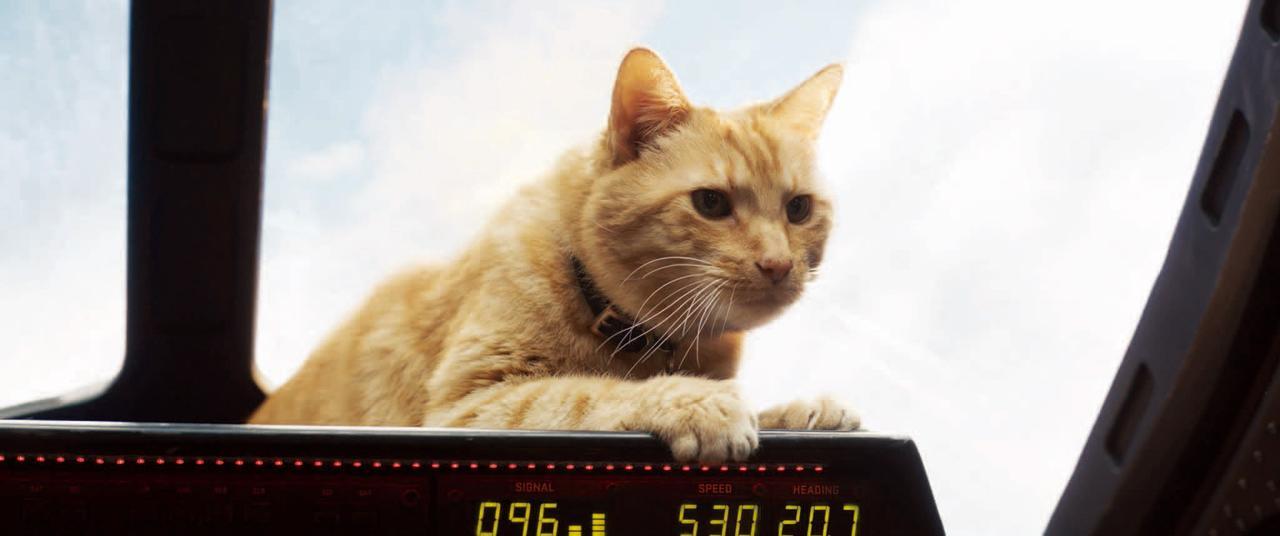 画像: 01:サミュエル・L・ジャクソンの猫の扱いにみなビックリ。