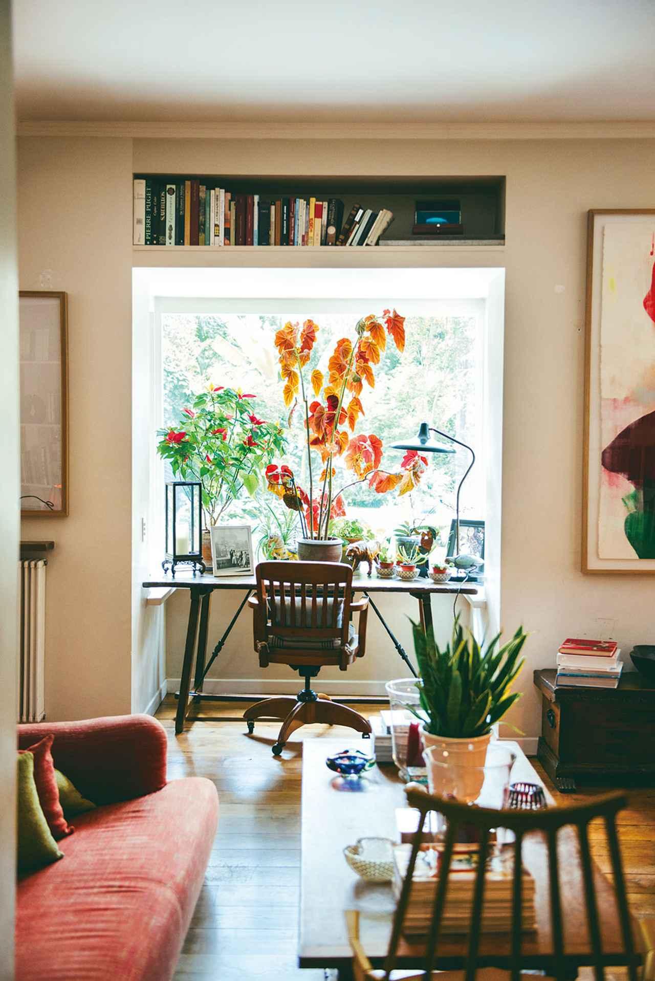 画像: 家のなかにも植物があちこちに