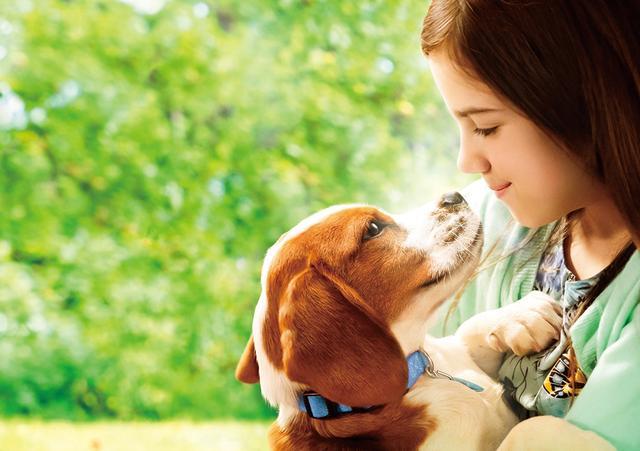 画像: 愛犬と飼い主が紡ぐ極上ラブストーリーが再び!