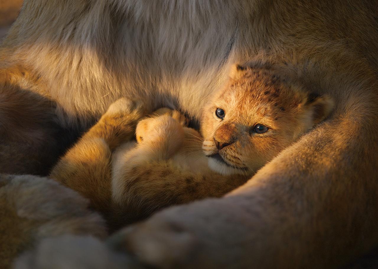キング ハイエナ ライオン