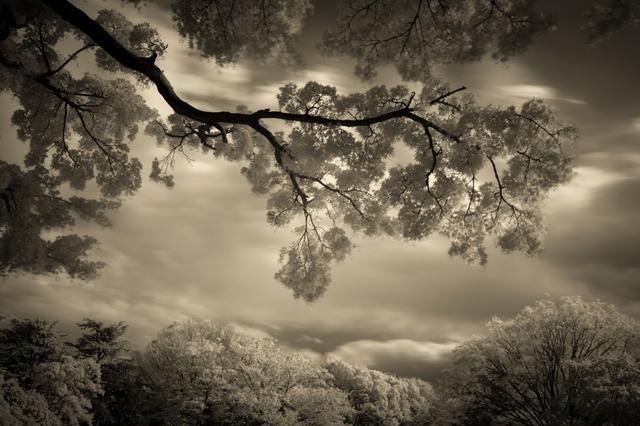 画像1: 写真家、安井進さんの写真展が9/10(火)から西麻布で開催