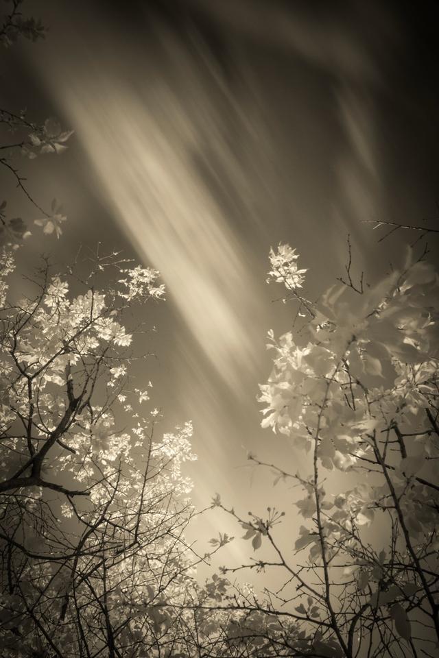 画像2: 写真家、安井進さんの写真展が9/10(火)から西麻布で開催
