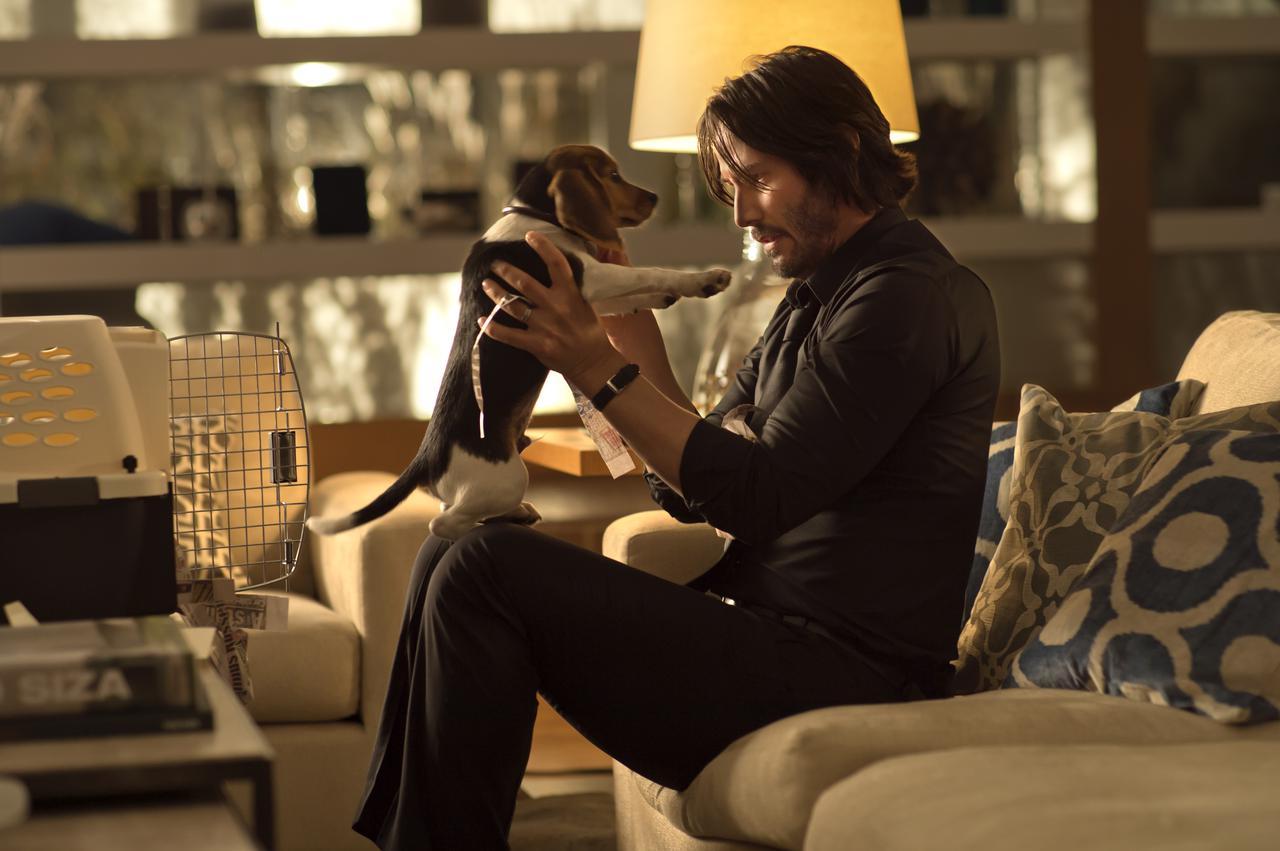 画像: 妻からの最後の贈り物であるビーグル犬との出会いが、長い長いジョン・ウィックの旅路の始まり