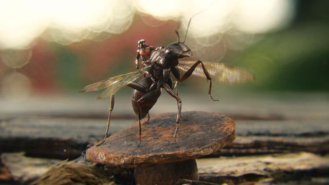 画像: アリの背中に乗るくらい小さくなります「アントマン」より