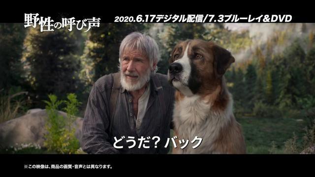 画像: 『野性の呼び声』2020.6.17デジタル配信/2020.7.3ブルーレイ&DVDリリース youtu.be